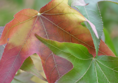 Onex, automne