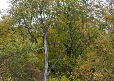 rhonefloreetfaune019