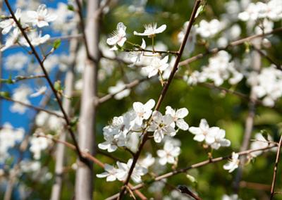 printemps onex