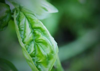 jardin potager Onex